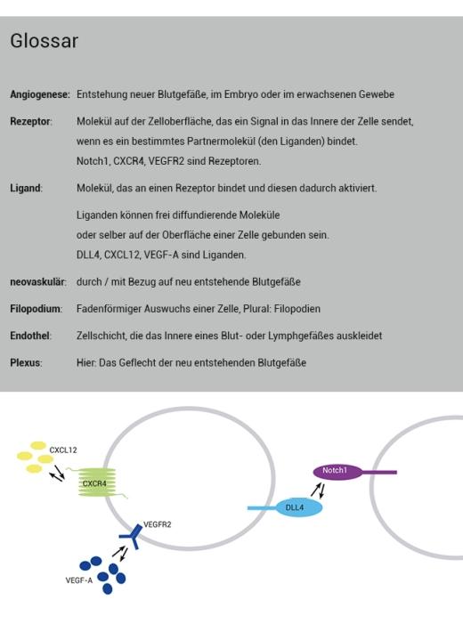 GlossarGraph zu Pitulescuetal